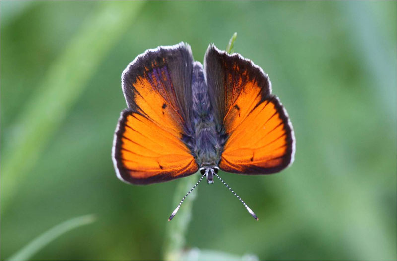 Balkan Copper