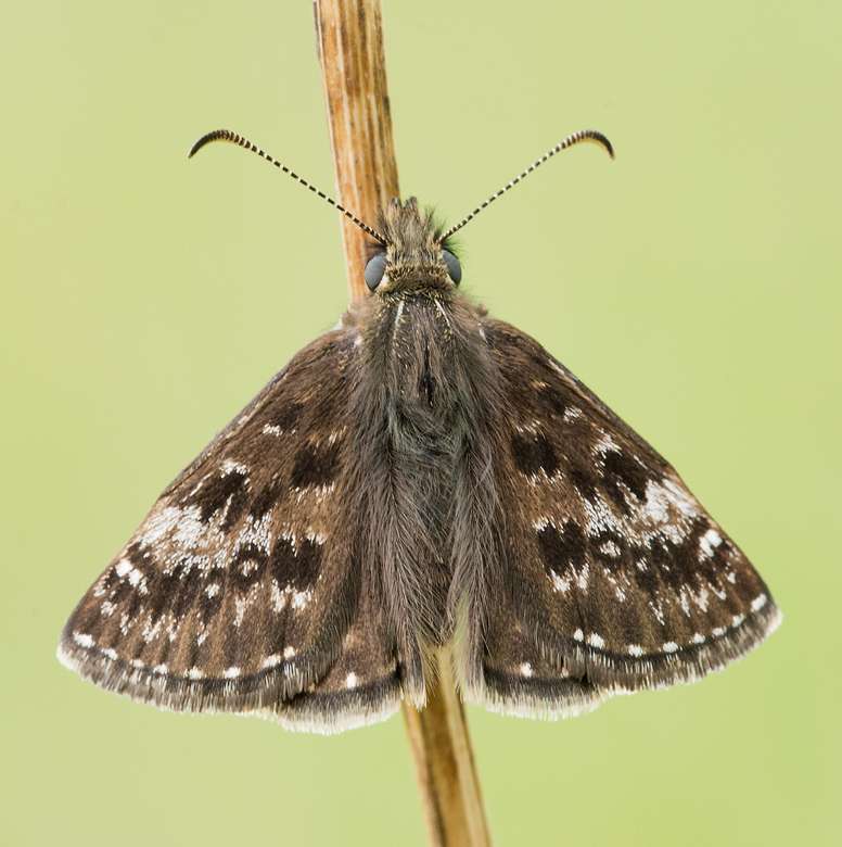 Butterfly Conservation - Derbyshire News & Blogs