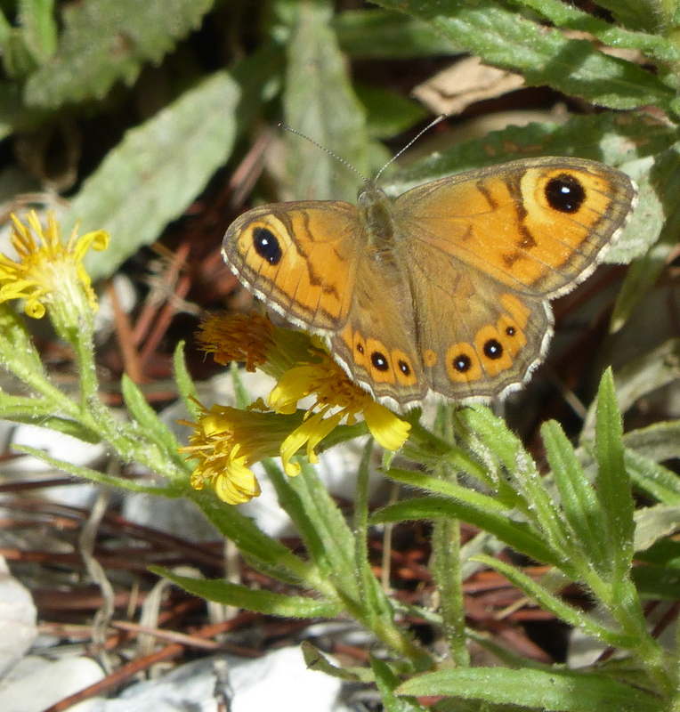 Large Wall Brown