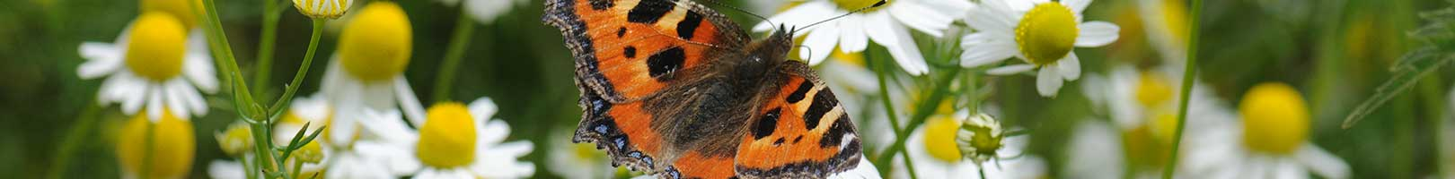 Header image - butterfly close up